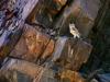 damaraland-ugab-owl